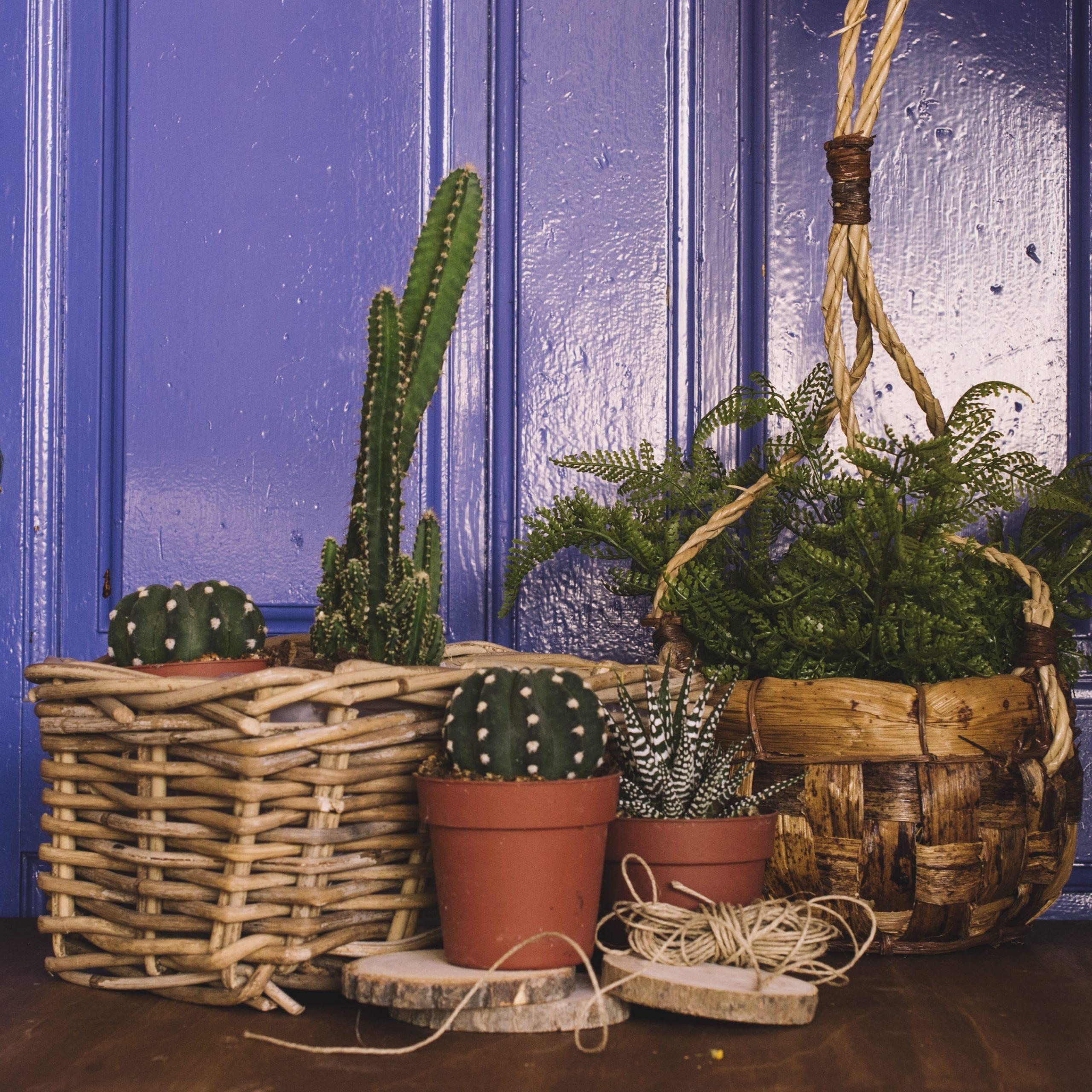 Седем растения, които ще преобразят всеки дом
